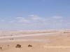Autre-Tunisie---DSC01004---CHOTT-JERID-EPISODE-3